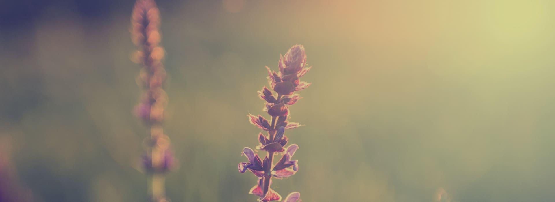 Healing & Growth