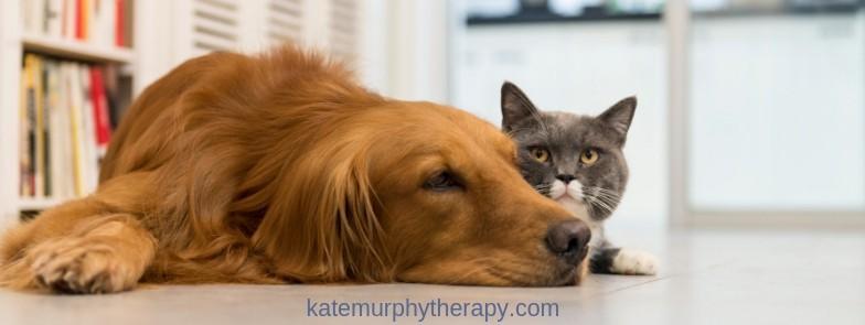 Grief & Losing a Pet